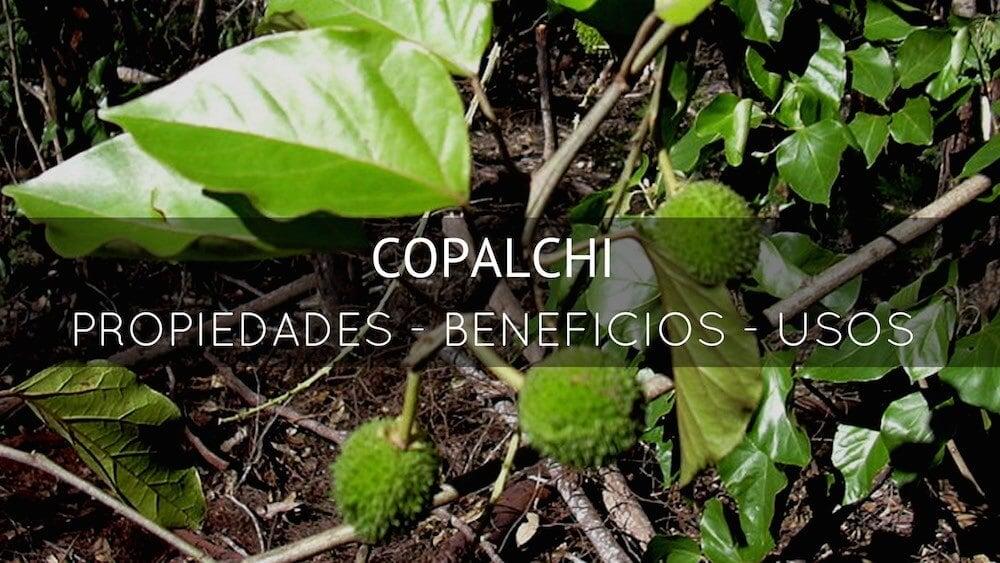 Copalchi-planta-medicinal