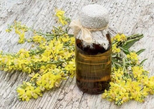 Propiedades medicinales del gordolobo-3